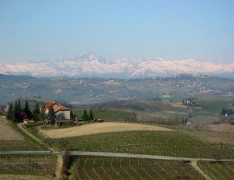 Pinot Grigio / Pinot Gris